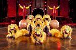El Circo del Sol llegará al Gran Canaria Arena, del 2 al 10 de agosto, con 'Dralion'